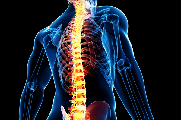 20 Facts About the Spine